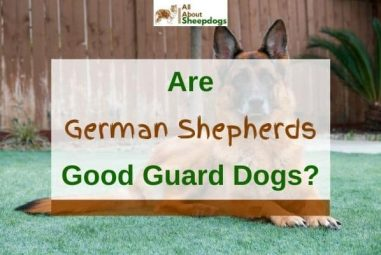 Are German Shepherds Good Guard Dogs? (Solved!)