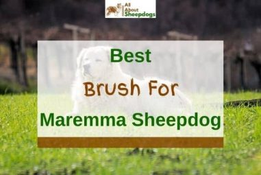 6 Best Brushes For Maremma Sheepdogs in 2021