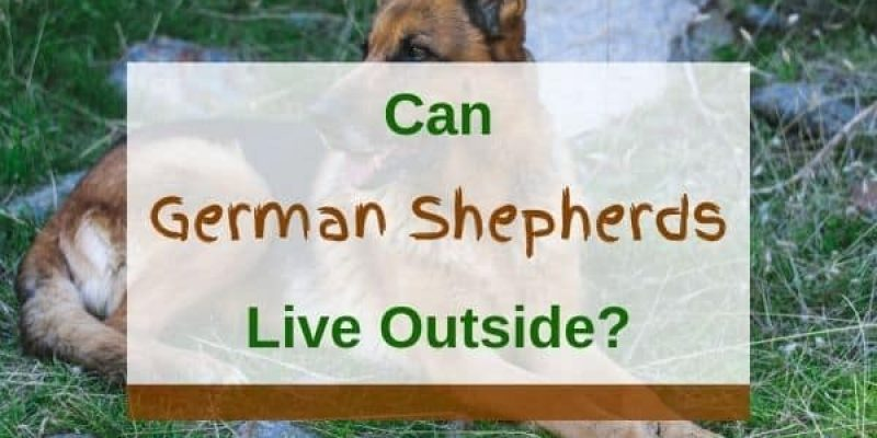 Can German Shepherds Live Outside? (Solved)